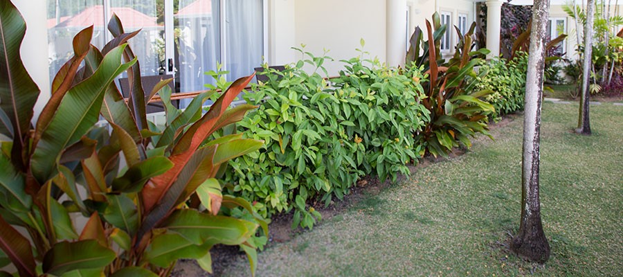 MLS_Accommodation_in_Seychelles_facilities_gardens_ (4)