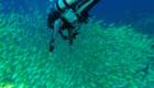 ttd_diving_snorkeling_01