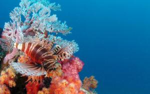 ttd_diving_snorkeling_04