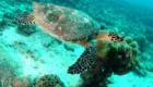 ttd_diving_snorkeling_05